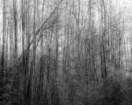 FLV-05.02-photographie poetique- DJ-DSCF4688