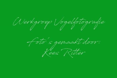 Kees Ritter
